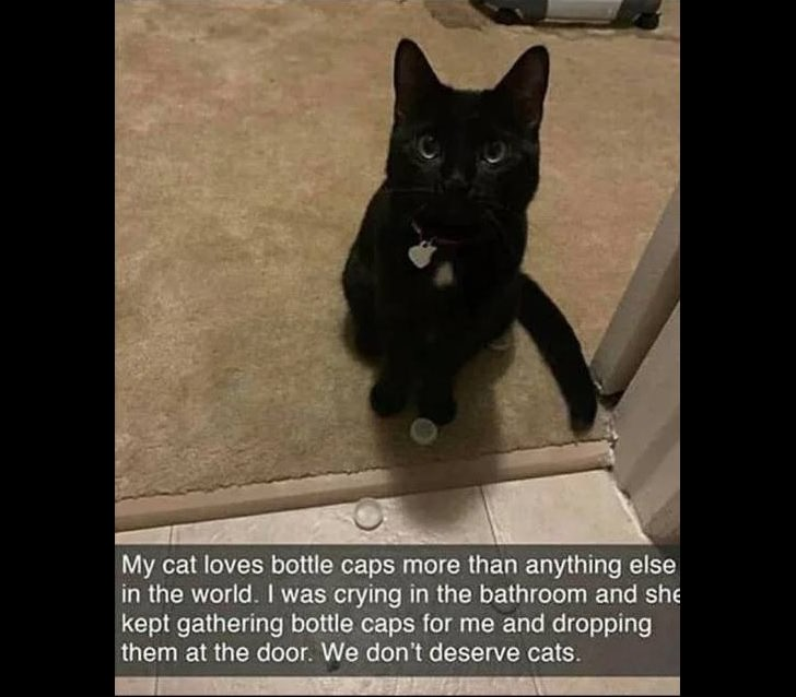 Wholesome and heartwarming pictures and stories, cat collecting bottle caps to give her owner to make her feel better