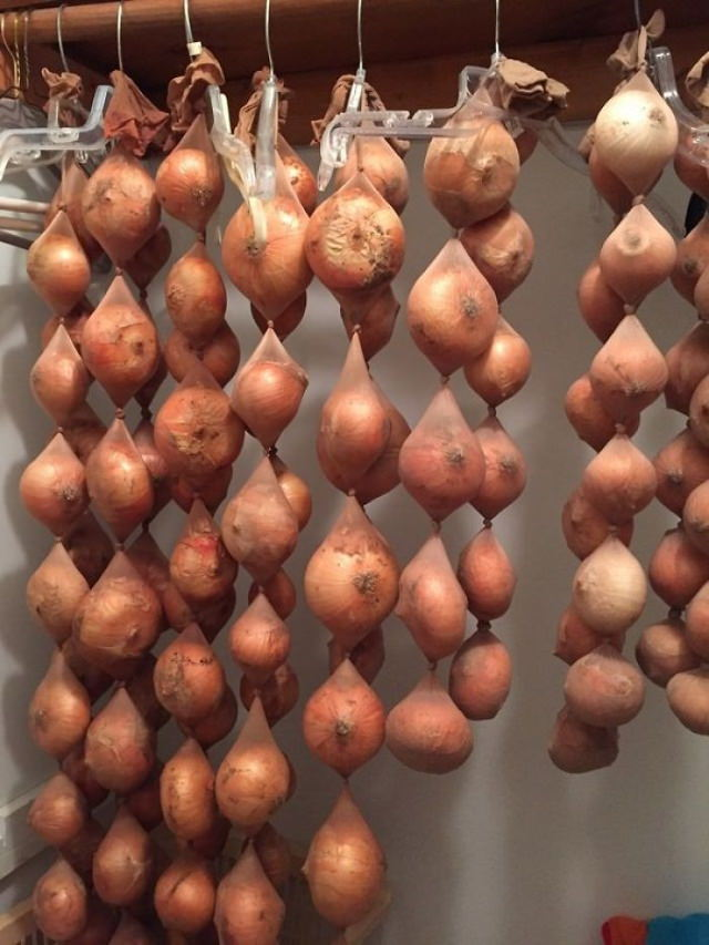 grocery tips onions in pantyhose