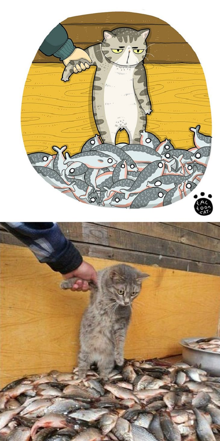 Cartoons of famous funny internet cats by Indonesian artist Tactooncat, Illustration and picture of grey cat standing on a pile of fish