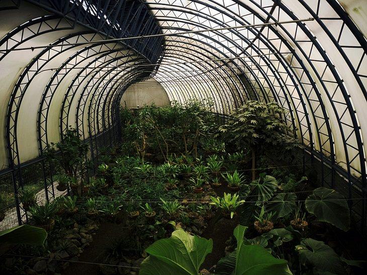Photo gallery of the Quito Botanical Garden in Ecuador, Orchid garden (Orquideario)