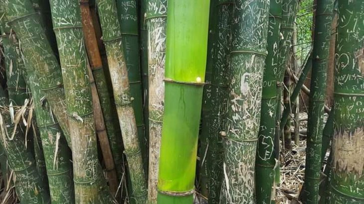 Amazing photographs that show differences, shapes and sizes through comparison, A bamboo stalk grown during the pandemic that is untouched by tourists