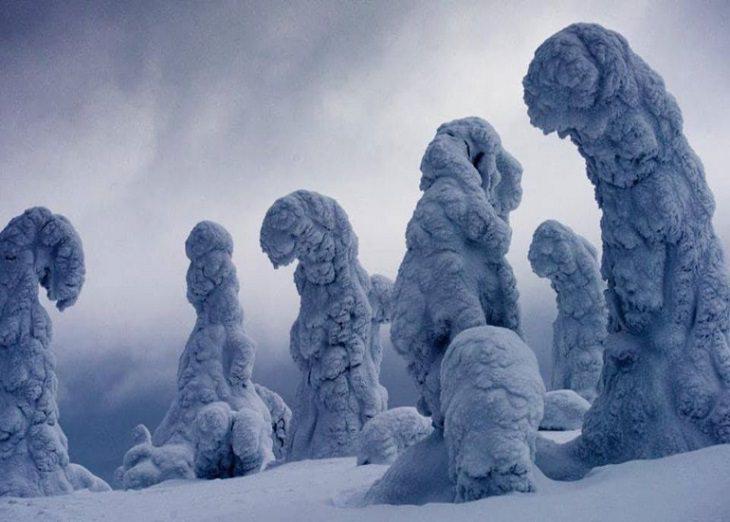 Imágenes de lo poderosa que es la naturaleza Árboles cubiertos de nieve en Finlandia