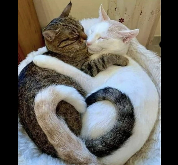 Beautiful pictures of touching, cute, and warm moments, 2 different colored cats hugging