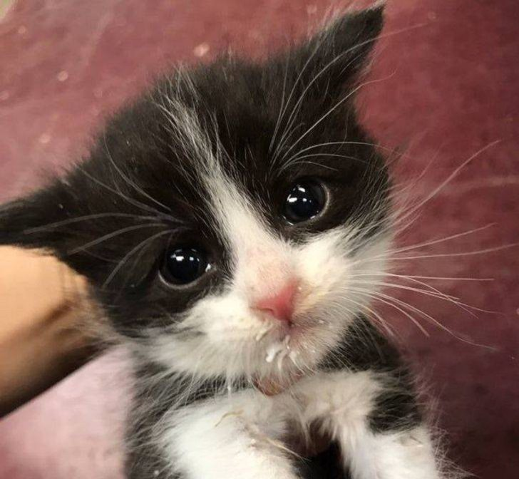 Adorable photographs of cute baby animals, Small black and white cat with big eyes