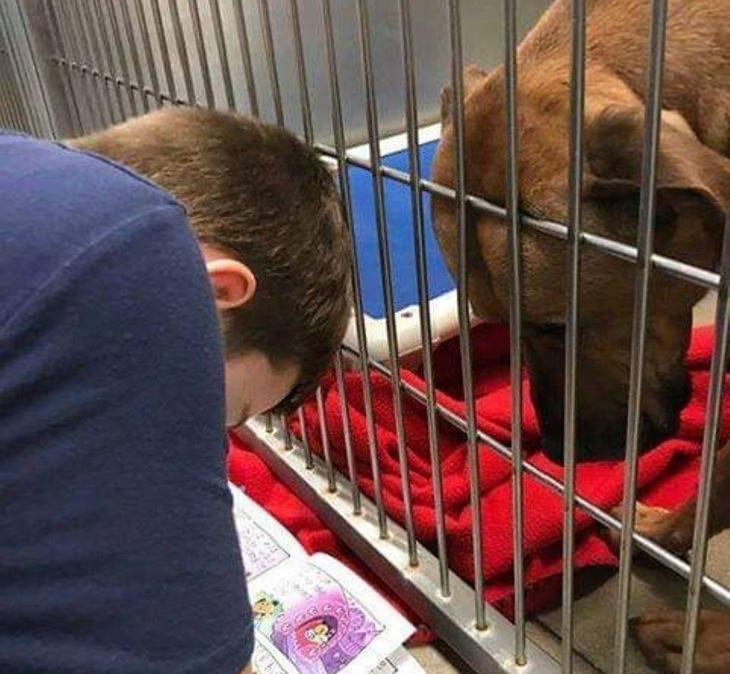 Photos of feel good stories that will make you smile, Kid reading to a dog at an animal shelter