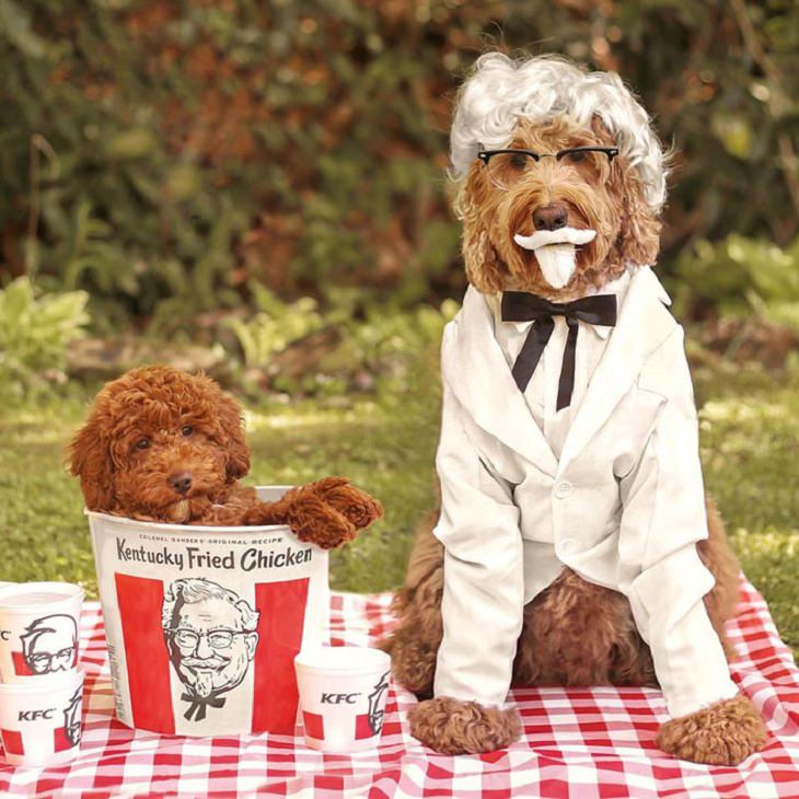 Cute and funny pet costumes for Halloween 2020, Two golden doodles, one dressed as the colonel and the other in a bucket of KFC