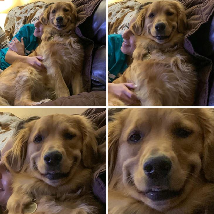 Photographs of smiling dogs, 4 photos of the same dog smiling close-up