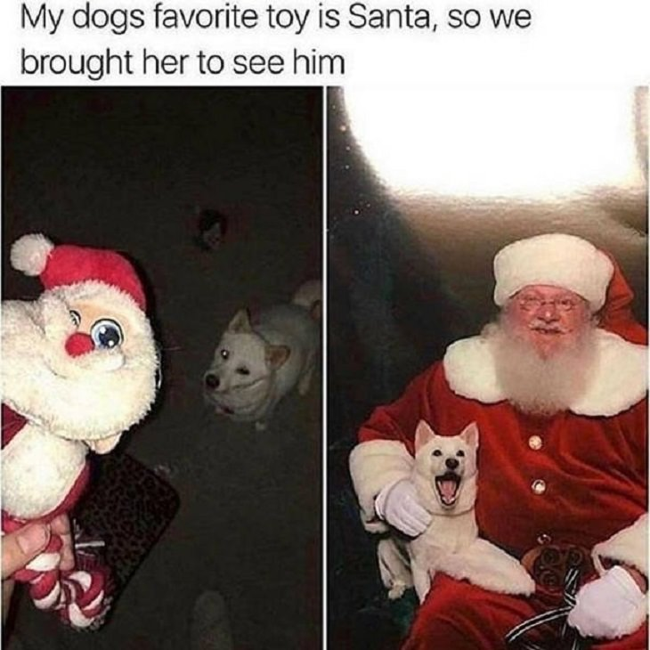 Feel Good Photographs that show sweet stories and acts of kindness, Dog happily sitting on Santa's lap