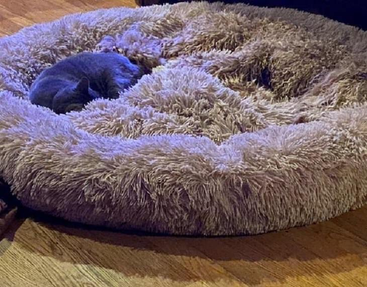 Funny pictures of household items, animals, and people that camouflaged, Golden doodle hidden in a carpet