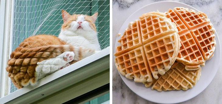 Pictures and photographs of cats that look like or resemble different types of food, Cat with a waffle butt after sleeping on a net