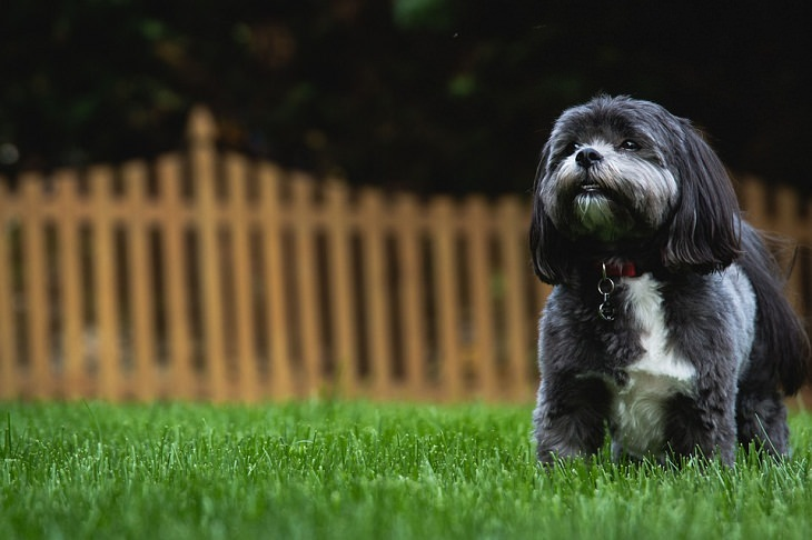 Shih Tzus Allergy-Friendly Pets
