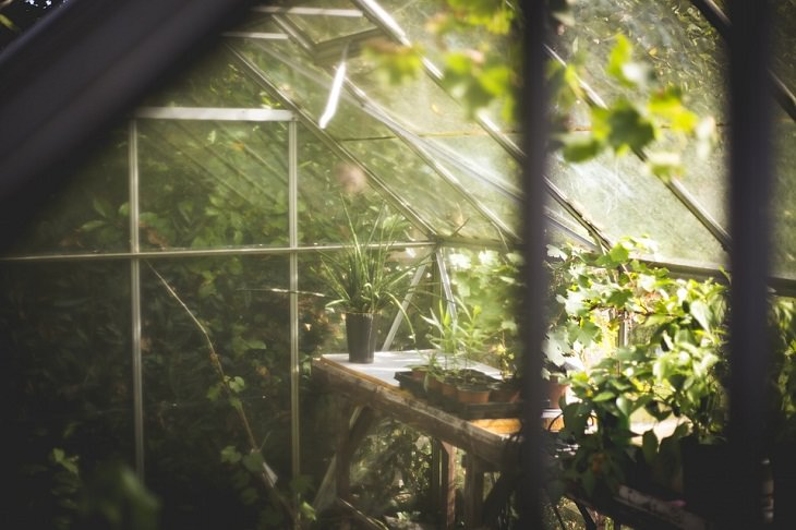 Clean out and wash your greenhouse Gardening Tips for Spring