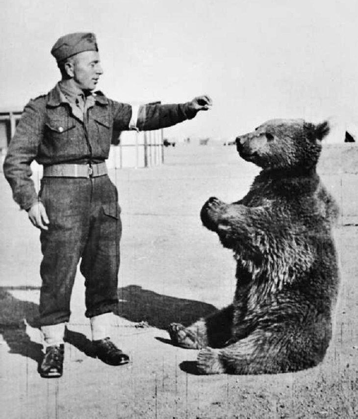 Wojtek the bear, world war