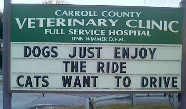 More hilarious joke, funny lines and clever anecdotes and puns found on signs outside Veterinary clinics, dogs enjoy the ride while cats want to drive