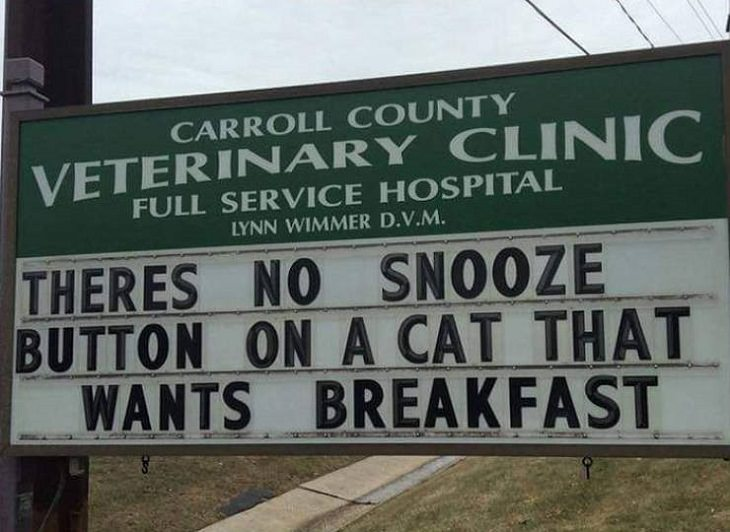 More hilarious joke, funny lines and clever anecdotes and puns found on signs outside Veterinary clinics, there's no snooze button on a cat that wants breakfast