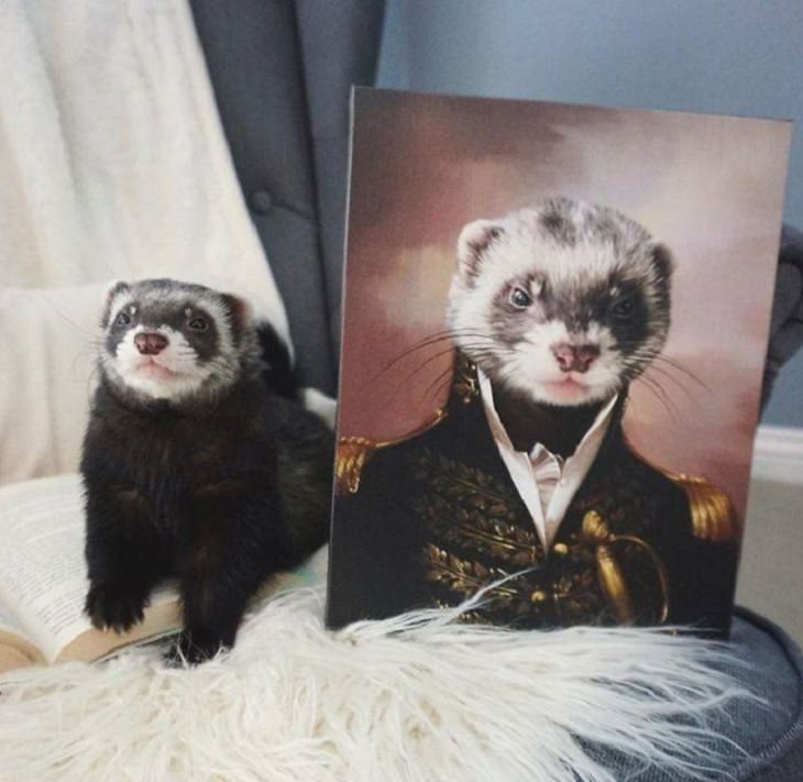 Beautiful and fantastical custom pet portraits from Crown & Paw depicting animals in a royal setting