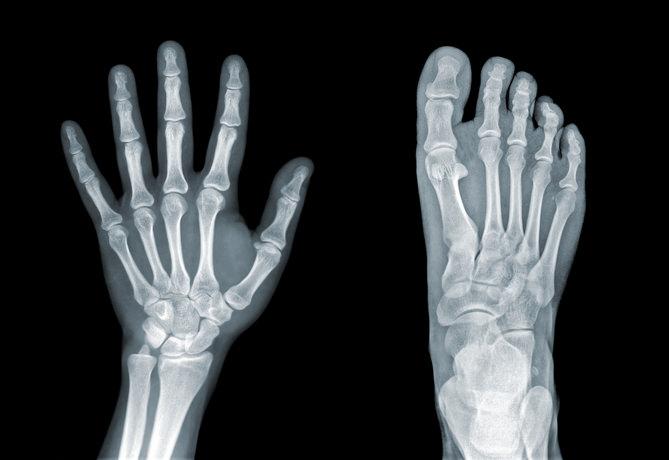 human bones hand and foot