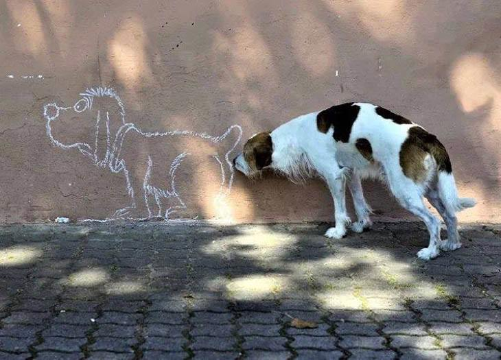 Hilarious, funny, perfectly timed dog moments caught on camera in photographs