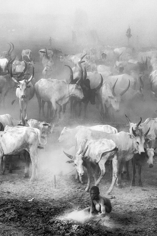 Winners of the 2019 Monochrome Photography Competition, Grand Prize, Monochrome Photographer of the Year, Professional, The Mundari cattle camp, By Trevor Cole from the United Kingdom