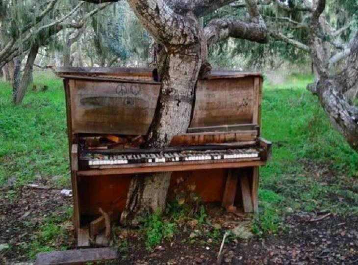 Photographs showing greenery, flowers, plants and trees growing over man-made objects, depicting times when nature won the battle against civilization, tree growing through a grand piano