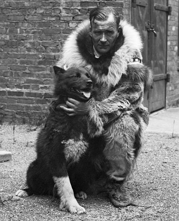 Most Famous Animals in the world, Balto, the Siberian Husky that saved a town