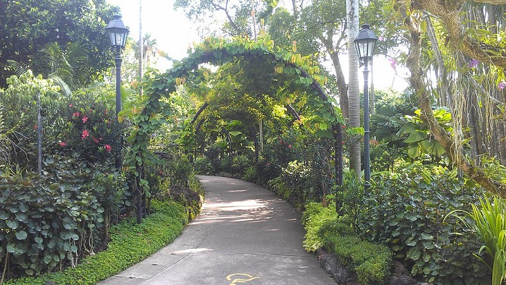 The many beautiful flowers, sights, attractions and exhibits in the natural oasis Singapore Botanic Garden, green plant arches at Singapore Botanic Garden