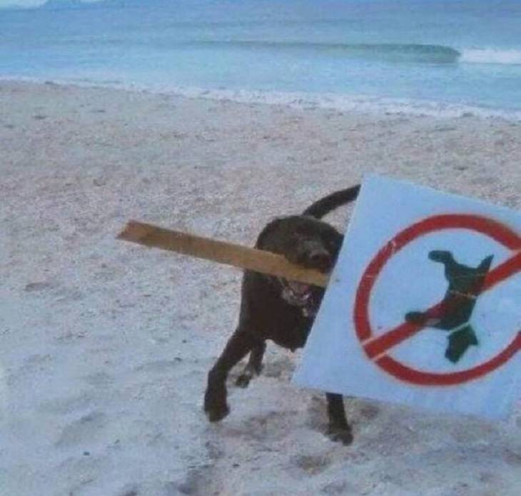 Rebellious and naughty pets and animals that don't like to follow rules
