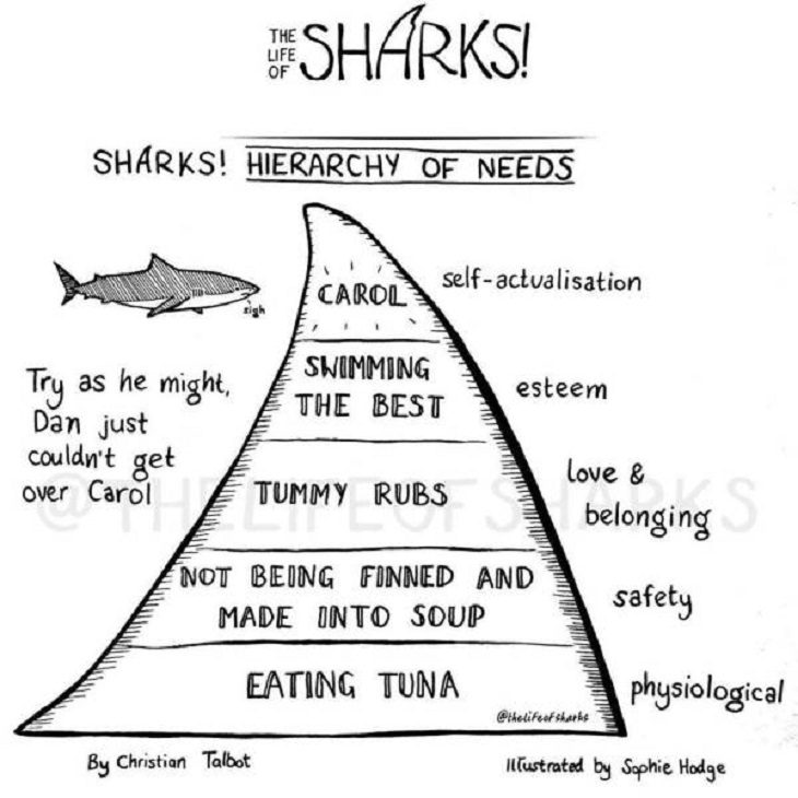 Funny comics on The Life of Sharks written by Christian Talbot and Illustrated by Sophie Hodge