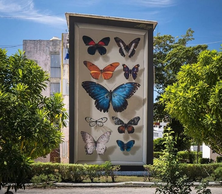 Hyper realistic butterfly specimen exhibits and displays painted as murals by street artist Mantra across the world, Mariposas del Yucatán