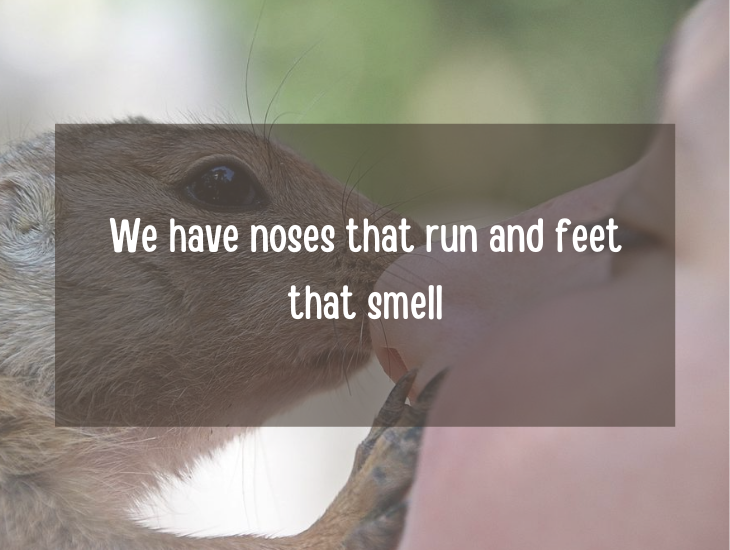 Examples and facts that show that English is a funny language, We have noses that run and feet that smell