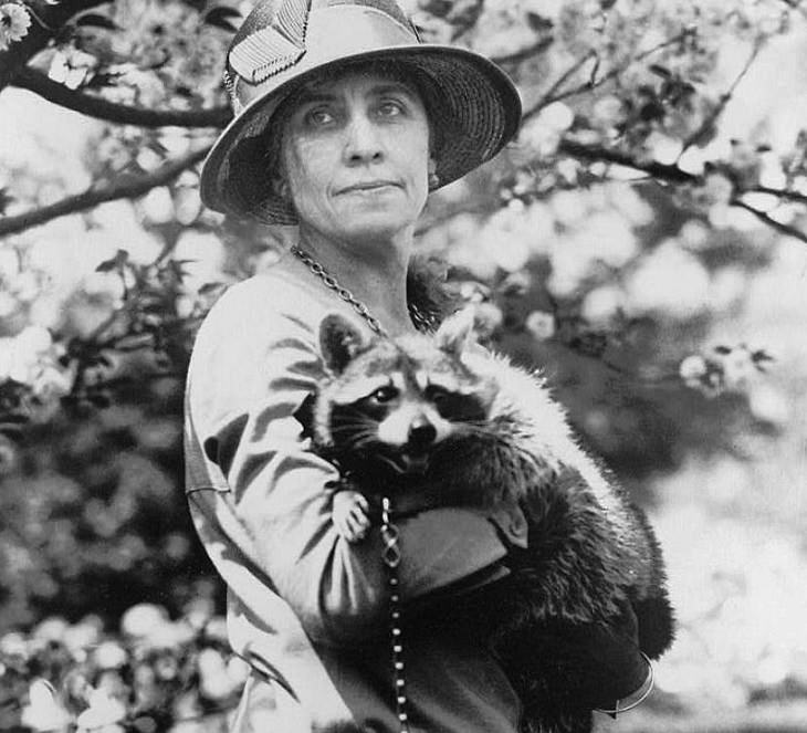 Celebrities and famous people that had strange and wild animals as exotic pets, First Lady Grace Coolidge with Rebecca, her pet Raccoon