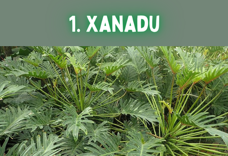 Unusual and strange colors, their names and origins, xanadu, ancient chinese city, greenish gray
