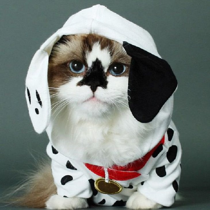 Cats dressed in costumes that are equally elegant, adorable and funny