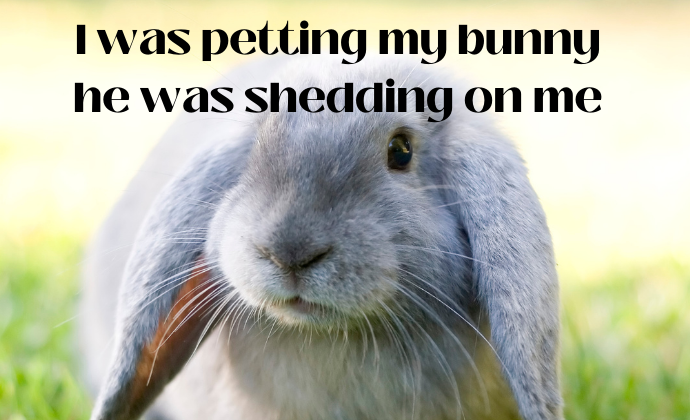 cute bunnies and a poem