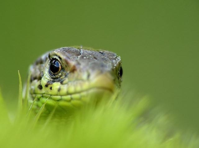 close up photograph of snake