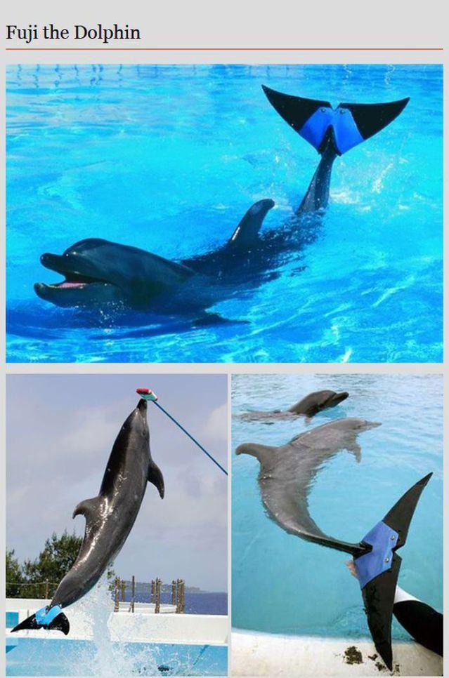 animal prosthetic