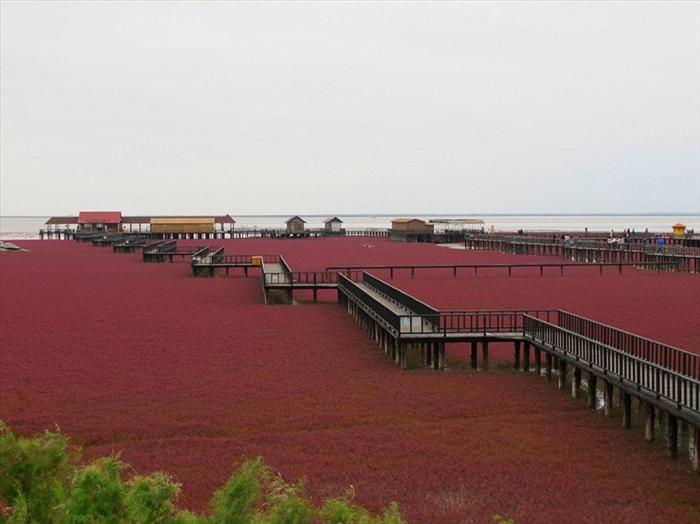 pajin red beach