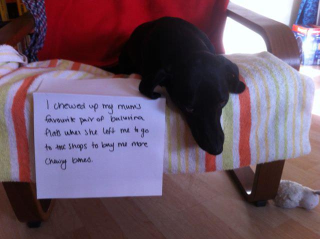 shame dogs