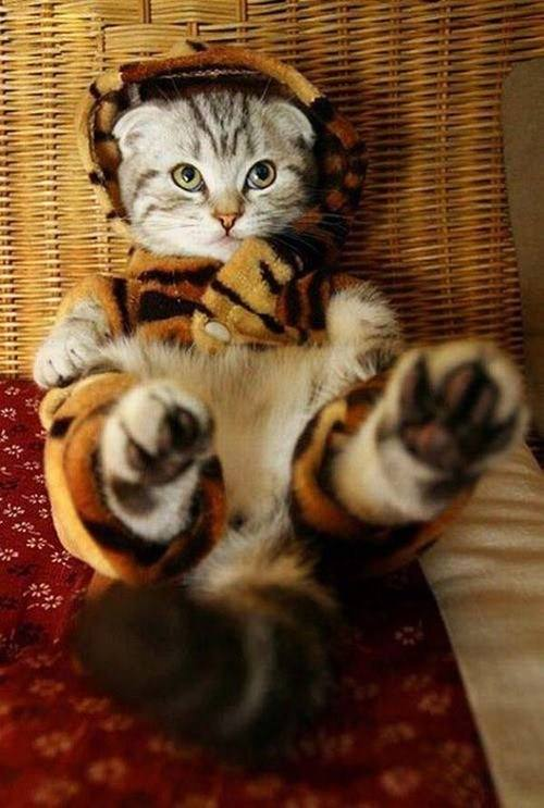 adorable cat photos