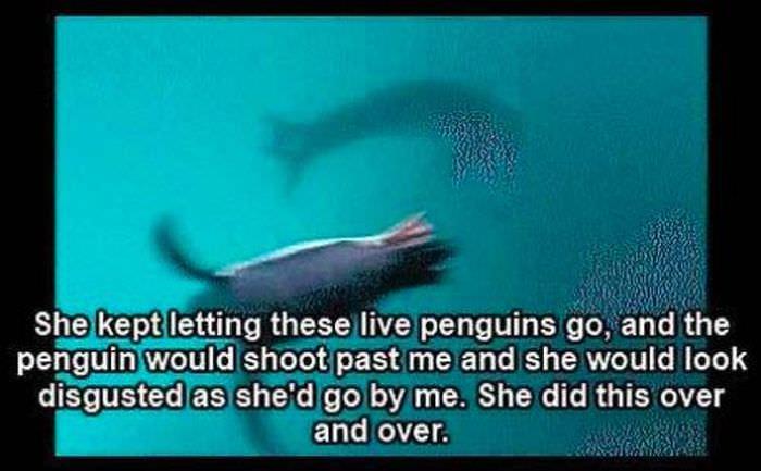 leopard seal story