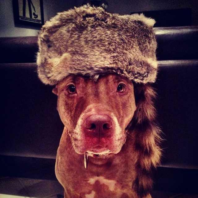 patient dog