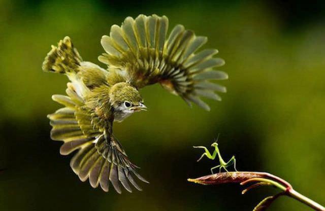 animal action shots