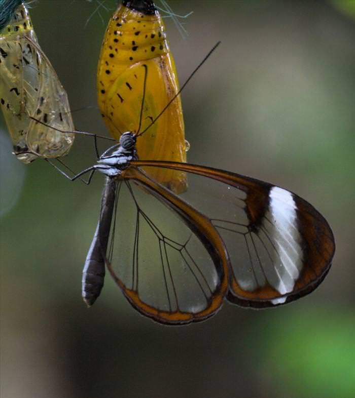 glass butterfly photos