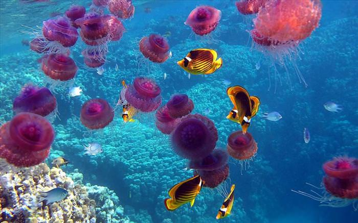 jellyfish photos