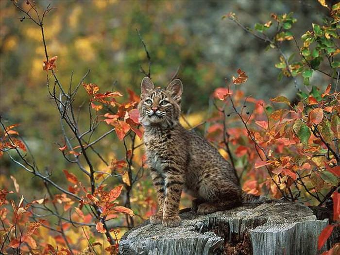 Animals Of The Fall Beautiful Nature