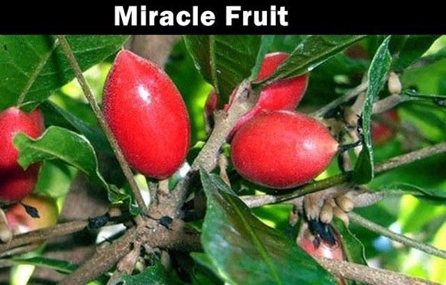 Little Known Fruit