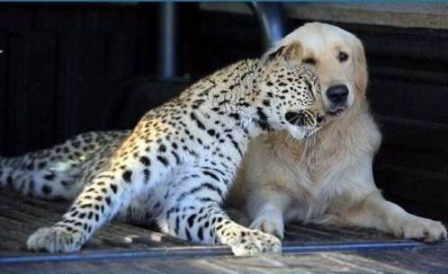 photo of animal friendship