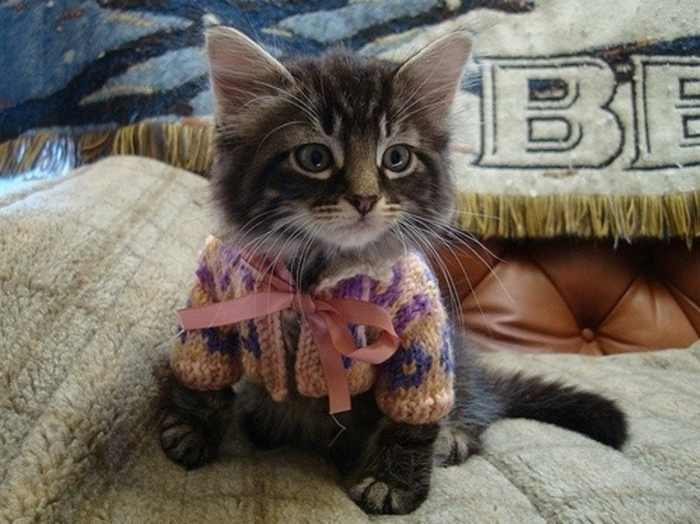 Cats in Sweaters Are So Cute