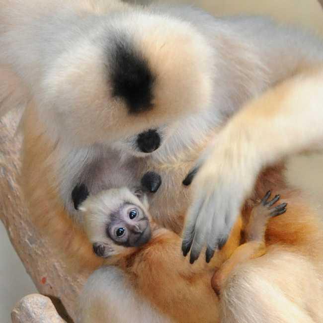 Adorable Monkey Babies