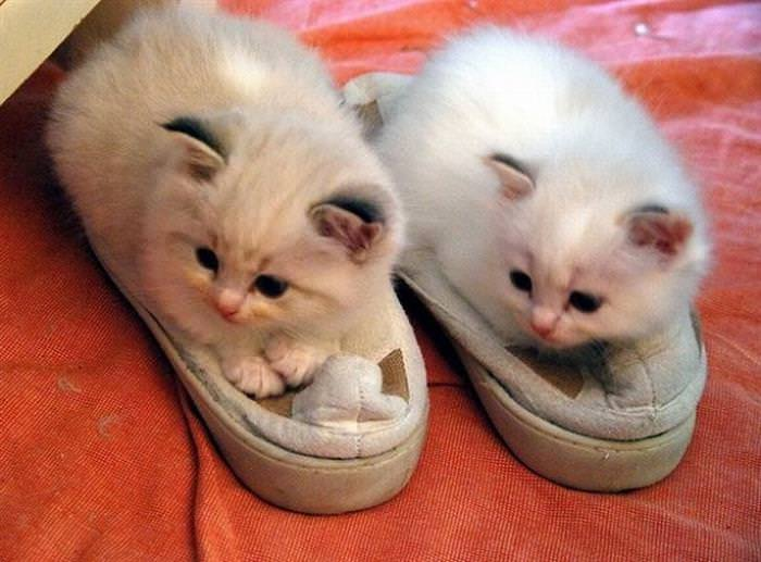 cute kittens on slippers